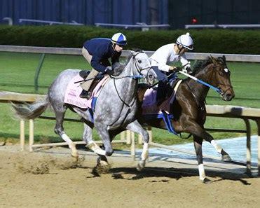 nickname horse profile bloodhorse