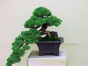 Pflege Von Bonsai Bäumchen : bonsai baum pflege zu hause ~ Sanjose-hotels-ca.com Haus und Dekorationen