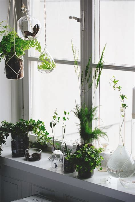 Indoor Window Sill Plants by Tips For Creating A Mindful Home Haus Window Sill And