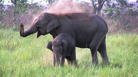 elephant tub india the jungle book indian forests come alive