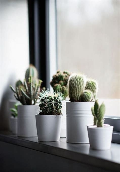 window sill decoration mini plants indoor garden cacti creative herb deavita gardens