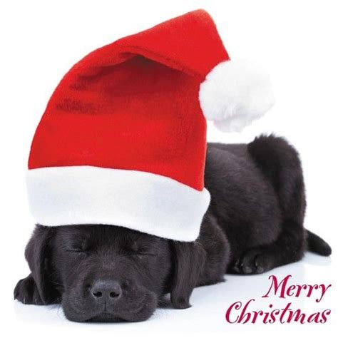 quality christmas cards cute comedy santa dogs puppies 26 different designs black labrador