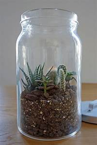 Minigarten Im Glas : pflanze im glas selber machen ostseesuche com ~ Eleganceandgraceweddings.com Haus und Dekorationen
