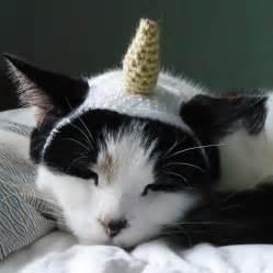 unicorn cat the cat s meow cat hats