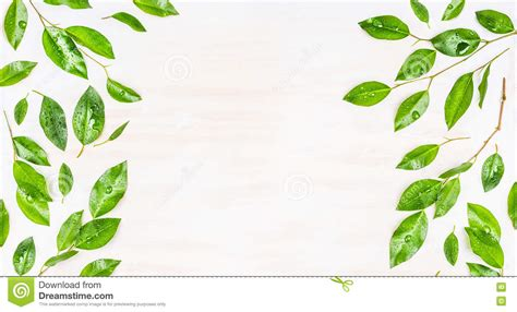 Border Or Banner Of Green Leaves With Dew Drops On White. Free Clip Art Signs. Footsteps Stickers. Nylon Banners. Moulin Rouge Logo. Wuu Media Car Murals. Horoscopeposts S Signs. Bread Logo. White Wall Decals