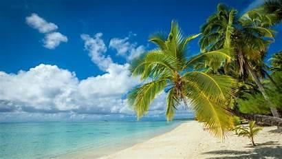 Tropical Island Palm Beach Nature Tree Landscape