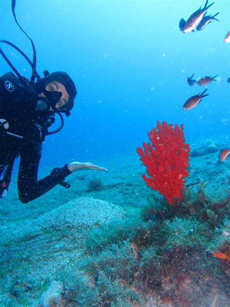 diving godive mykonos diving resort