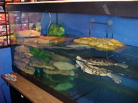 eared slider tank randy s turtle page