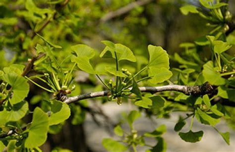Botanischer Garten Wien Pflanzenverkauf by Botanischer Garten Wien Auf At