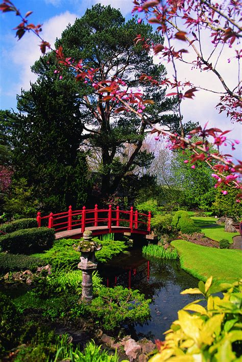 irish national stud japanese gardens