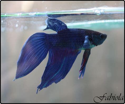 poisson au fond de l aquarium 28 images conseils poissons d aquarium truffaut poissons de