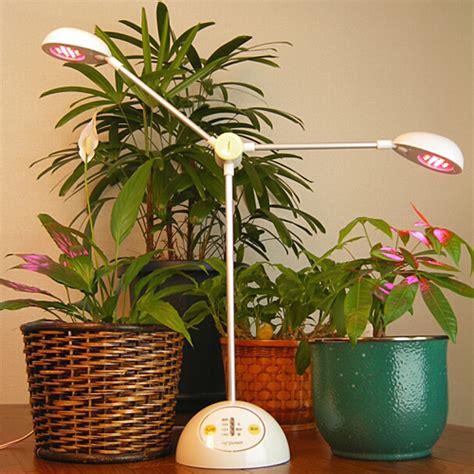 lights for indoor plants