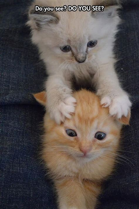 Cute Cat Pictures  Cute Animal Pictures And Videos Blog