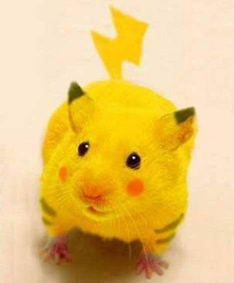 Is Pikachu A Mouse Cat Or Rabbit Pokémon Quertime