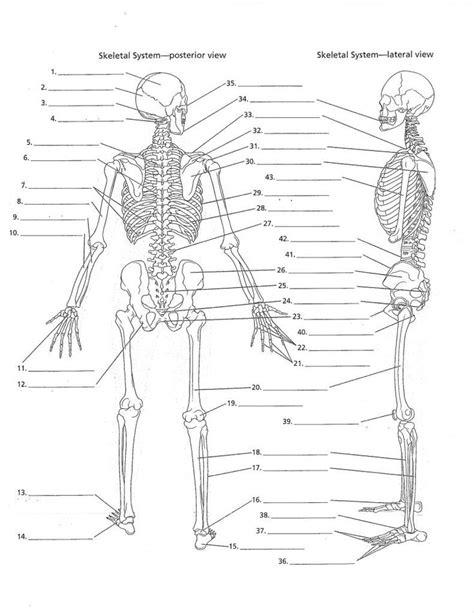 images   heart anatomy  pinterest