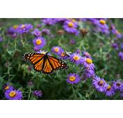 10 Tips For Attracting Butterflies To Your Backyard