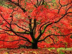 maple treeserviceofnashville