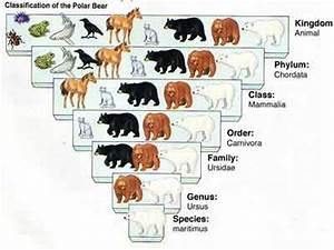 kingdom phylum class order family genus species coloring ...