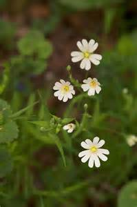 Small White Flowers Spring