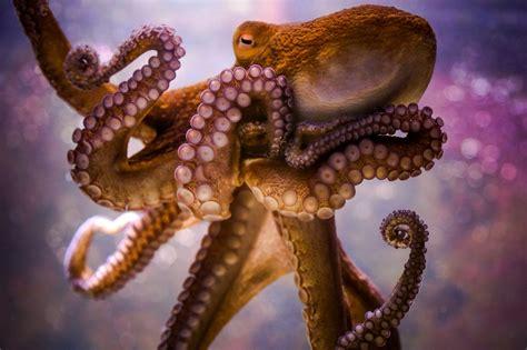 Animals Octopus Bokeh Wallpapers Hd Desktop And Mobile Backgrounds