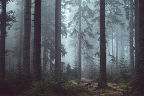 Dark Forest Background With Moon 100 Forest Pictures Download Free Images On Unsplash