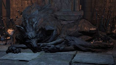 dark souls   wolf  farron  optional stray demon