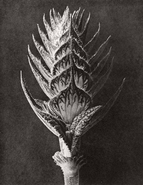 biography fine art botanical photographer karl