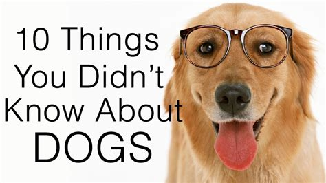 10 things you didn 39 t know about dogs doovi
