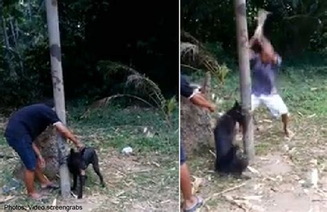 dog beaten  death  camera sparks outrage asia news