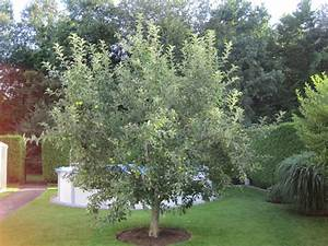 Apfelbaum Schneiden Wann : vernachl ssigten apfelbaum schneiden seite 3 garten ~ Watch28wear.com Haus und Dekorationen