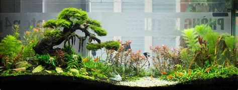aquascape designs products all about aquaristic by hoang nguyen aquascaping