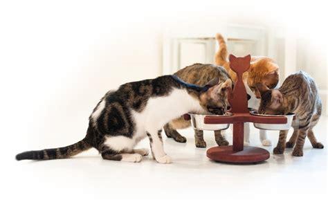 multi cat feeder 4 bowl multi cat raised feeder via etsy cattastic