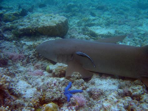 Requin Dormeur by Requin Dormeur