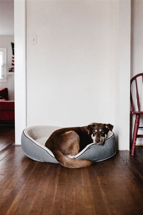 best flooring with pets the best flooring options for pet owners good home health