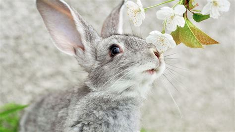 Bunny Background Rabbit Wallpapers Wallpaper Cave