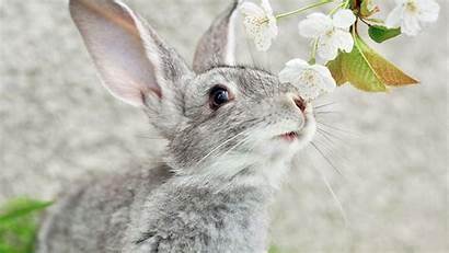 Rabbit Bunny Background Wallpapers Grey Winter Desktop