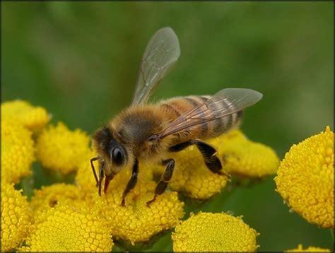 wespen bloemen bloemen voor bijen in het groene woud