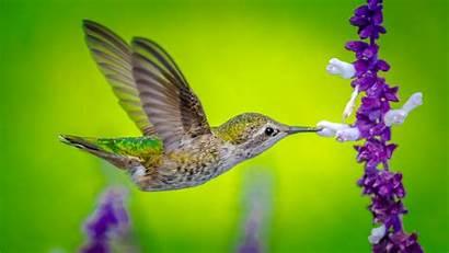Hummingbird Bird Flower 5k Birds Animals Wallpapers