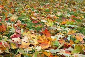 Rasen Düngen Herbst : mit herbstrasend nger den rasen im herbst d ngen und auf ~ Watch28wear.com Haus und Dekorationen