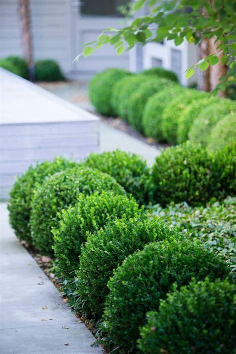 Gartengestaltung Mit Buchsbaum by 25 Best Ideas About Boxwood Garden On Boxwood