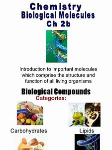 002b Biological Molecules Ppt