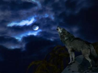 Wolf Moon Lobos Howling Luna Aullando Wallpapers