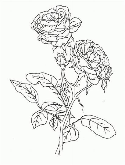 Coloring Flower Rose Pages Printable Pretty Compass