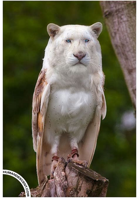 showcase  creative  weird animal photo manipulations