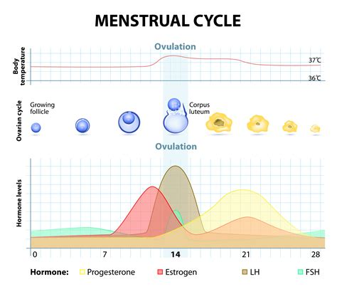 Training Recovery During Your Menstrual Cycle