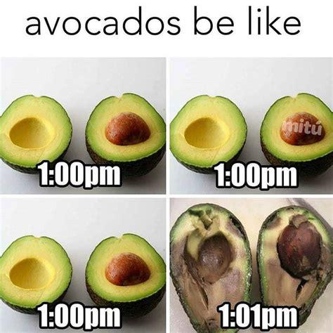 Avocado Memes - what does avocado taste like let me tell you