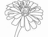 Zinnia Flower Coloring Drawing Zinnias Printable Flowers Drawings Easy Outline Colouring Designlooter Paintingvalley Getdrawings sketch template