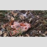 Aaliyah Dead Body Parts   710 x 398 jpeg 49kB