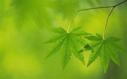 Background Leaf Leaves Trees Wallpapers