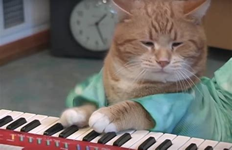 Cat Playing Piano Meme - the legendary keyboard cat has passed away at age 9 complex